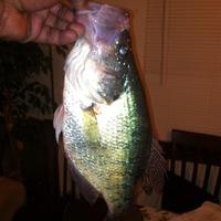Wright Patman Lake Fishing Report 01/01/2013