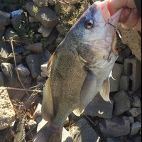Katy Storm Sewer Fishing Report 02/04/2016