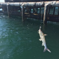 Offshore Fishing Report 07/19/2016