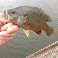 Waterloo Lake Fishing Report 10/11/2014