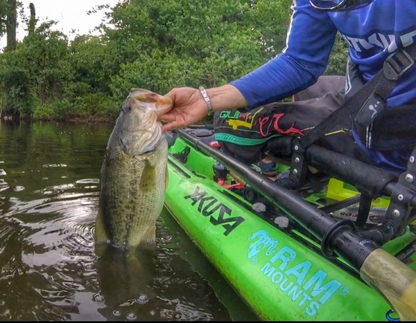 Largemouth bass lake houston tx fishingscout for Places to fish in houston