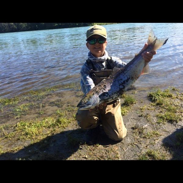 Sockeye salmon kenai river ak fishingscout for Kenai fishing report