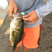 LNVA Canal and Ponds Fishing Report 05/29/2015