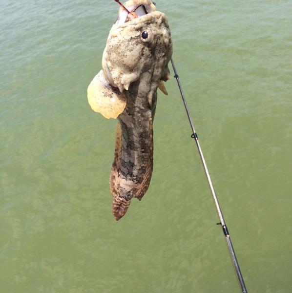 Bite alert copano bay tx fishingscout for Copano bay fishing