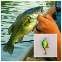 Lake Trammel Fishing Report 06/10/2016