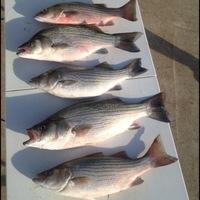Jim Chapman Lake Fishing Report 05/13/2013