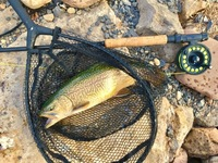 Potomac River South Branch Fishing Report 07/25/2017