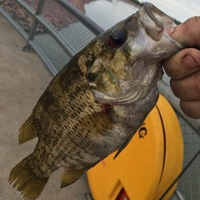 Lewis and Clark Lake Fishing Report 08/19/2016