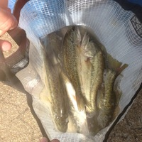 Clyde Lake Fishing Report 04/07/2014