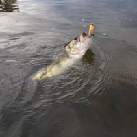Rusk State Park Fishing Report 01/22/2014