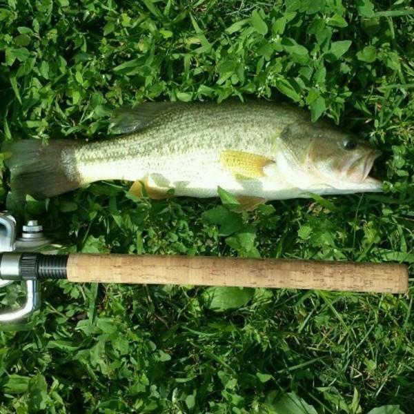 Washington park lake fishing reports fishingscout mobile app for Fishing report washington