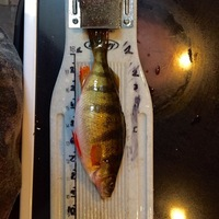 Other Freshwater Fishing Report 12/31/2016