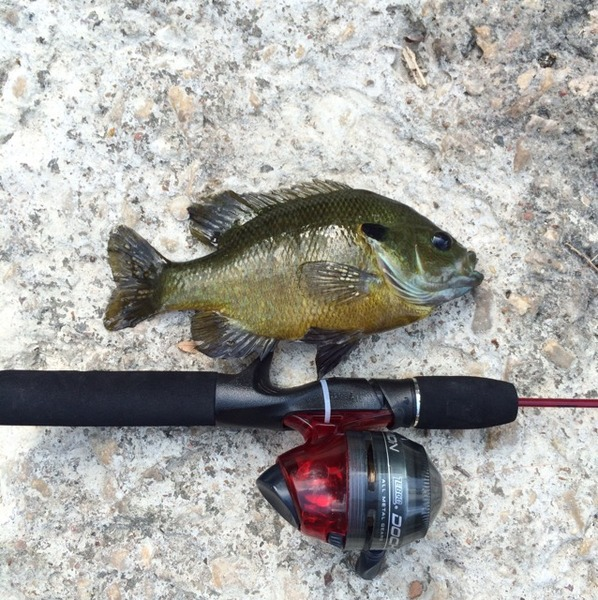 Saltgrass Spillway (near Costco and Bryant Irvin Rd) Fishing Report 08/22/2015