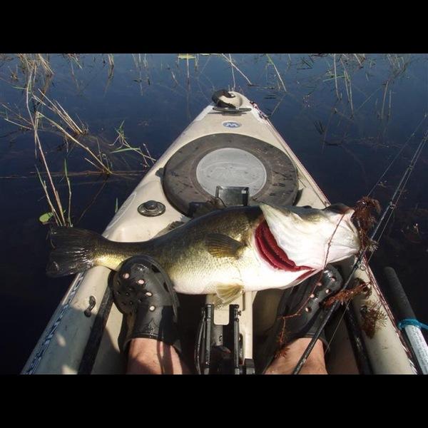 Lake jackson tallahassee fishing reports fishingscout for Jackson lake fishing