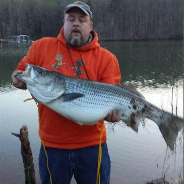 Lake oconee striper fishing report for Lake oconee fishing report