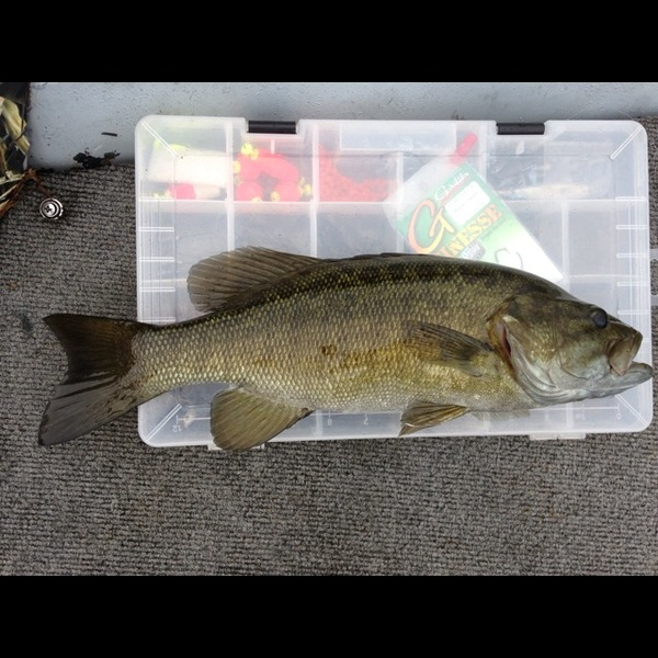 Smallmouth bass potomac river north branch md wv for Wv fishing report