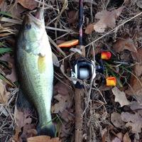 Waterloo Lake Fishing Report 02/08/2015