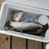 Trinity Bay Fishing Report 09/24/2016