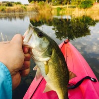 Boerne Lake Fishing Report 08/27/2015