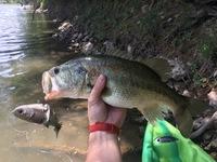 Brazos River Fishing Report 04/09/2017