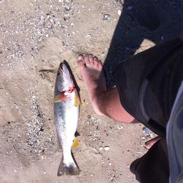 Spotted speckled trout delaware bay de nj fishingscout for Delaware bay fishing report