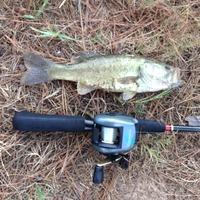 Conroe Ponds Fishing Report 08/01/2015