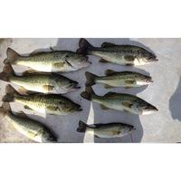 Lake Limestone Fishing Report 07/18/2014