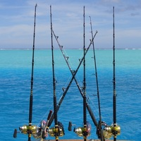 Offshore Fishing Report 11/30/2015