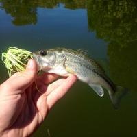 Lake New Ingram  Fishing Report 10/04/2014