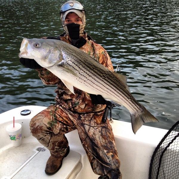 Striped bass carters lake ga fishingscout for Carters lake fishing report