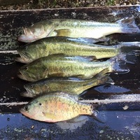 Other Freshwater Fishing Report 09/07/2016