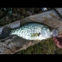 Decatur Ponds Fishing Report 08/30/2012