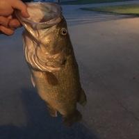 Benbrook Lake Fishing Report 06/11/2016