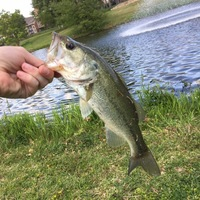 Flower Mound Ponds Fishing Report 04/14/2017