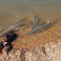 Granger Lake Fishing Report 07/23/2015