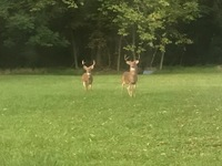 Baltimore County Hunting Report 09/21/2017