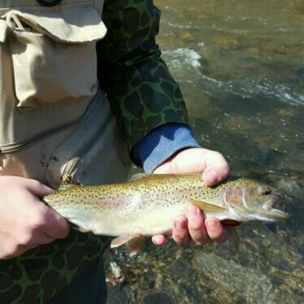 Steelhead trout eighteenmile creek ny fishingscout for Clear creek fishing report