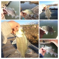 Off the Water Fishing Report 03/08/2017