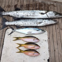 Offshore Fishing Report 12/10/2015