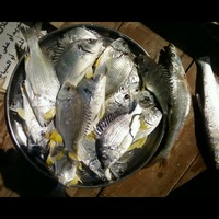 Other Freshwater Fishing Report 06/17/2014