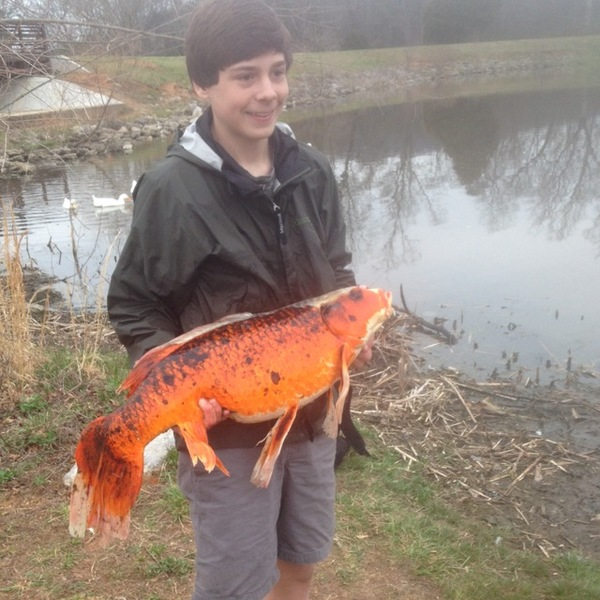 How do you access the fishing report for Reelfoot Lake?