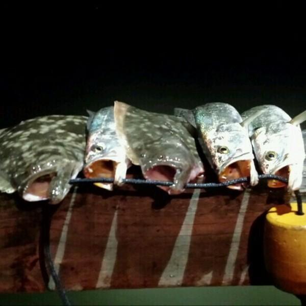 Clear Lake Fishing Report 12/17/2014