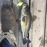 Conroe Ponds Fishing Report 06/30/2015