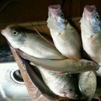 Lake Anahuac Fishing Report 02/04/2016