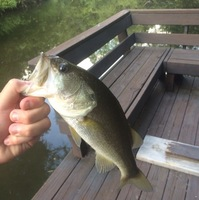 Lake Austin (Austin) Fishing Report 09/05/2016