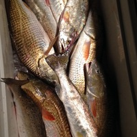 Lake Austin (Bay City) Fishing Report 11/01/2013