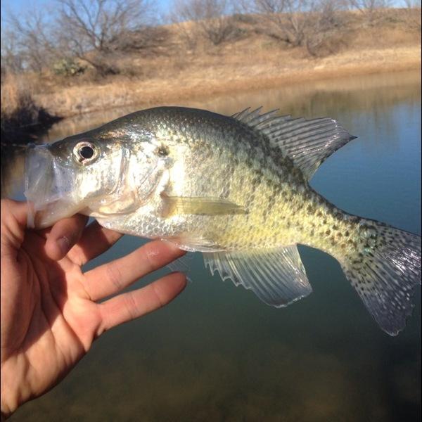 Lake Brownwood Fishing Report 01/18/2013