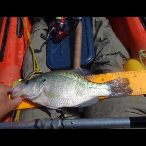 White crappie benbrook lake tx fishingscout for Benbrook lake fishing