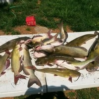Green River Fishing Report 08/19/2017