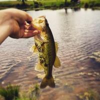 Fairfield Ponds Fishing Report 04/03/2015